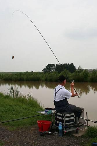 feeder vissen