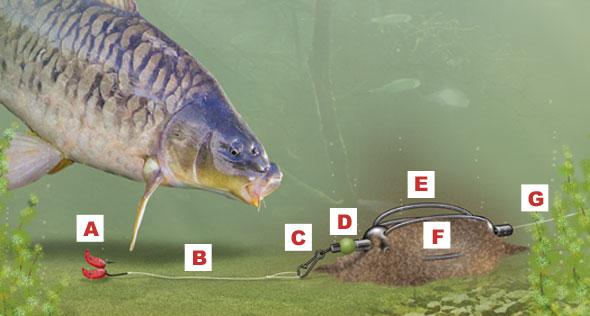 feedervissen